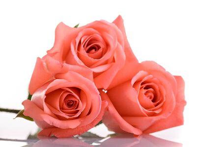 orange rose flower bouquet isolated on white background, beauty peach color tone Banco de Imagens - 137893434