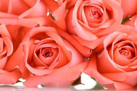 orange rose flower bouquet background, beauty peach color tone Banco de Imagens - 137893744