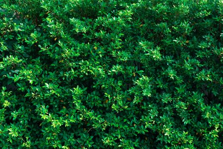 green leaf foliage plant wall background