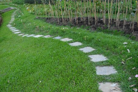 concrete block pathway in green grass garden 版權商用圖片