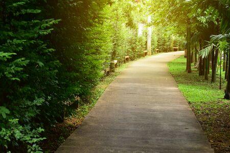 Sentier dans la nature verdoyante du parc public de détente à pied
