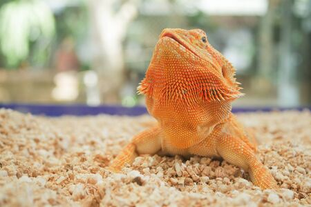 reptil animal of small exotic pet