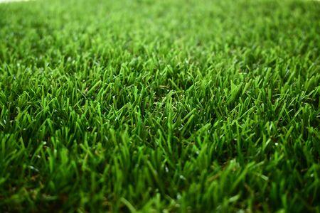 green grass turf floor artificial