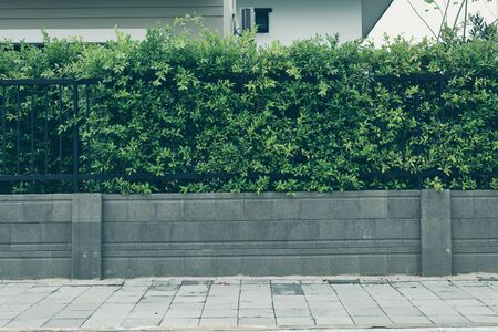 concrete block wall and pavement sidewalk street floor, black iron fence with green leaf of shrub tree growing in natural garden Standard-Bild