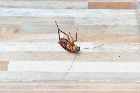 one creepy cockroach dead on floor with insecticide killing