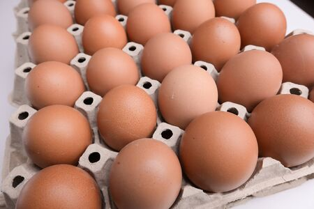 fresh organic egg in paper panel of consume industry