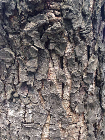 bark: Bark Stock Photo