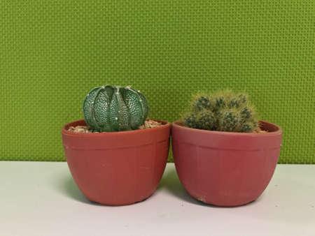 interior: Cactuses