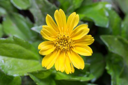 seasonic: Yellow flower