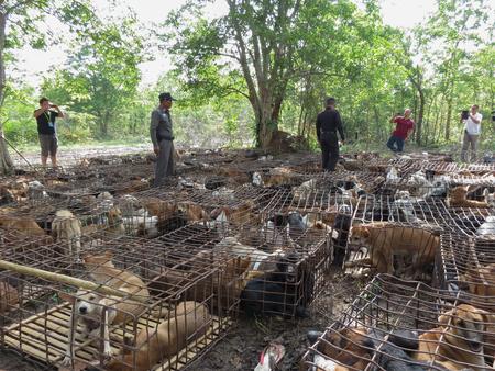 tierschutz: AUFRUF f�r Tierrechte Thailand sp�ter (10. Oktober 2014), der National Legislative Assembly (NLA.) Erw�gt ein Gesetz zur Grausamkeit und des Tierschutzes zu verhindern. das Prinzip ist Beand heute die Tharae Sakon Nakhon, Thailand, der ber�hmten Handel.