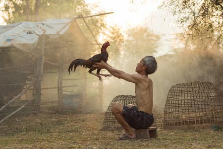 闘鶏を持つ男は、人気の東での生活の方法です。現在のシャモ スポーツ、非常に人気です。スポーツとの戦いに固定でお金を稼ぐ。 写真素材 - 40355451