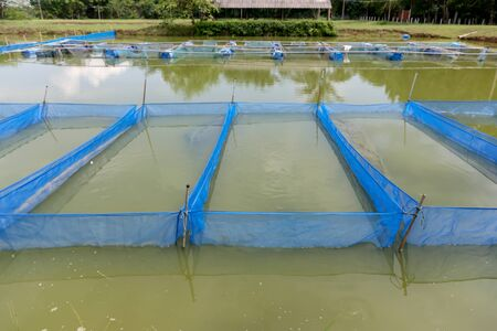fish farm: Fish farm cages By Sufficiency Economy
