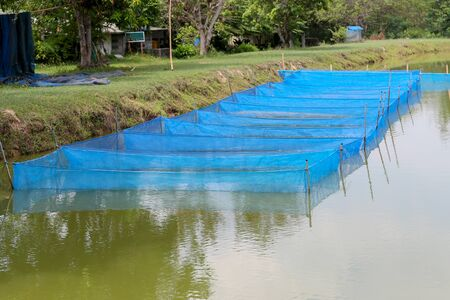 cages: Fish farm cages By Sufficiency Economy Thailand