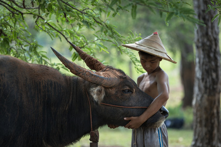 helpmate: Children love to Buffalo With both fellow players and friends that rice. Stock Photo