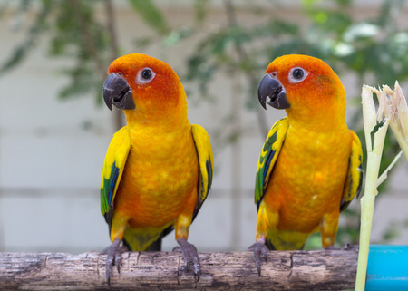 the two parrots: Two Parrots Court