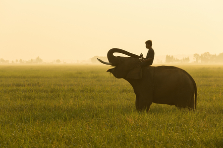mid morning: Elephant and mahout mid morning all was green. Stock Photo