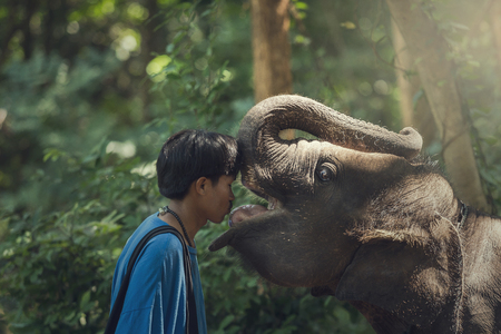 love expression: Kiss me The expression of love of elephants and mahouts are lovely.
