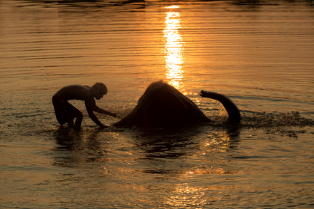 mahout: Silhouette ,Mahout and elephant bathing in the pool. sunset time.