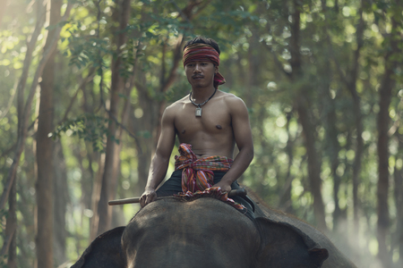 mahout: Asian,Thailand. Mahout riding on elephant back. Kui is the life of elephants. Stock Photo
