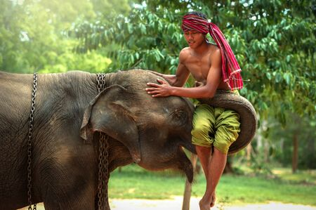 canny: Culture of Surin,Thailand.The love during elephant with mahout