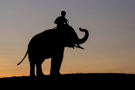 mahout: Elephant silhouette sunset with mahout on the moutain