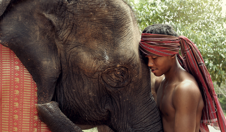 mahout: Elephant with mahout