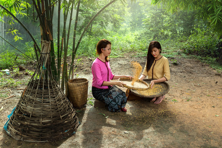 winnowing: Asians women are winnowing rice For sorting rice The traditional practices of farmers.