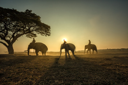 Three elephants walking the rope to a tree during a sunrise silhouette.