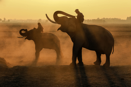 mahout: Elephants and two mahout at sunrise