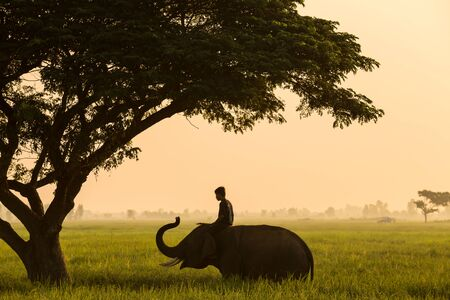 adult kenya: Elephant mahout thailand life traditional of asia culture Stock Photo