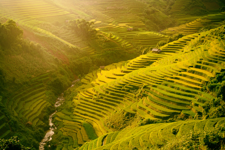 Morning rice terraces in the gorge. Vietnam Rice field terraces on the mountains in Mu Cang Chai Vietnam. Stock Photo