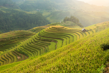 Rice terraces field landscapes beautiful of Mu Cang Chai Yen Bai Vietnam.
