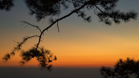 Pine tree silhouette sunset at Phu Kradueng Loei Province Thailand. Landmark of travel in Winter season.