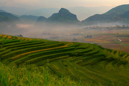 Vietnam Tu Le Yen Bai Rice terrace curved landscape  this is the rice field on north Vietnam.