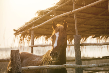 Horses in the evening stalls near sunset.