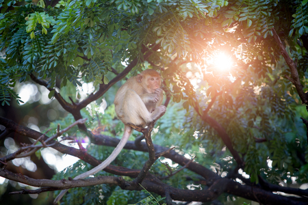 Monkey on a tree with green leaves and morning sunlight. World of wildlife 写真素材