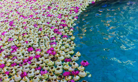 piety: White lotus floating in the pool Stock Photo