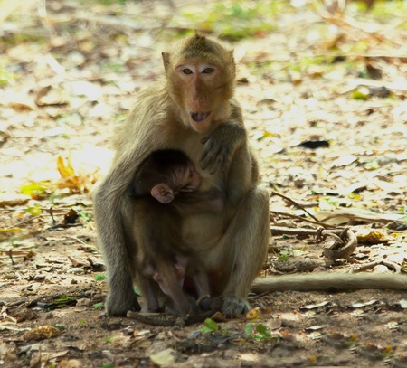 Monkey with its baby Stock Photo - 19757927