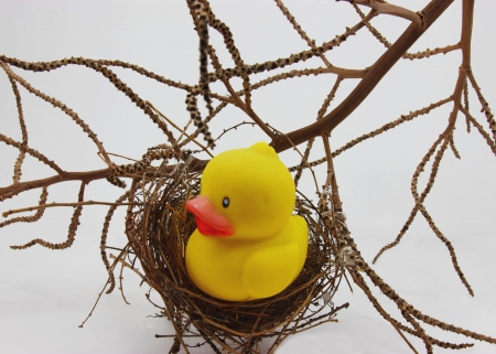 Nest and Yellow toy duckling on white background photo