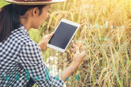 Smart farming Agricultural technology and organic agriculture Woman using the research tablet and studying the development of rice varieties in rice field Stock fotó