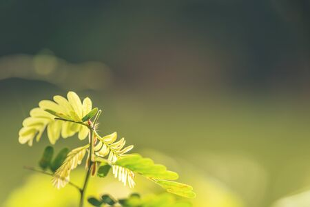 abstract bokeh blur nature green color for background,blurred and defocused effect spring concept for design