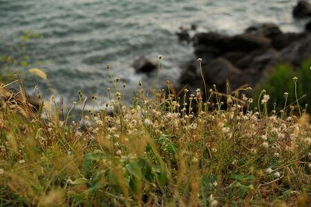 flower and sea photo