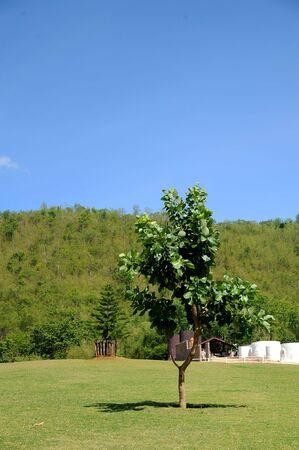 tree an wall Stock Photo - 7895046