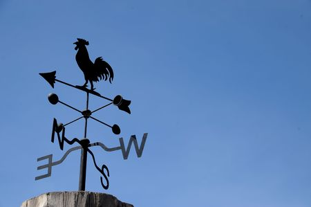 rooster Stock Photo - 7895025