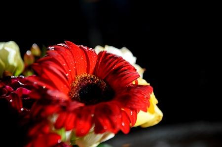 flower Stock Photo - 9452005