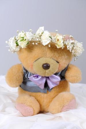 bear in studio photo