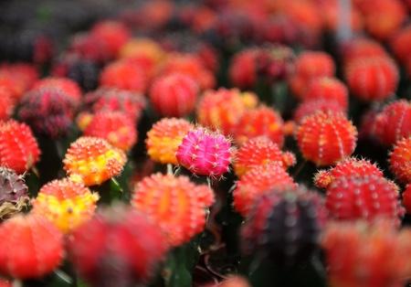 cactus beautiful photo