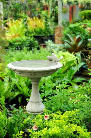 in garden photo