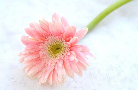 a beautiful pink flower photo