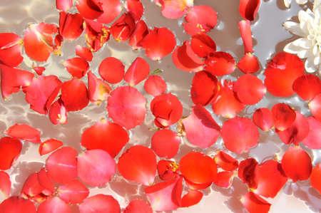 bowl water: rose